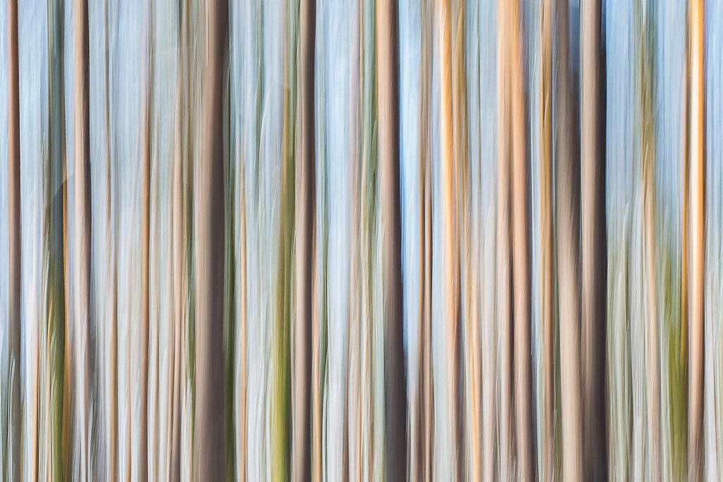 friedrich-erhart-barcode-I.jpg