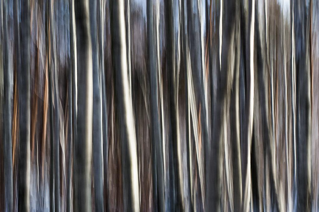 friedrich-erhart-barcode-III.jpg