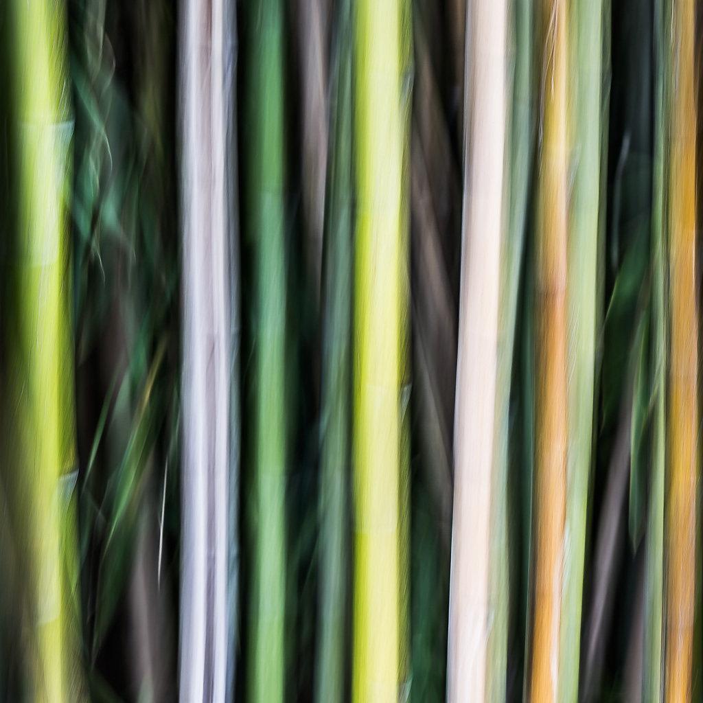 Bambus-I, 2015