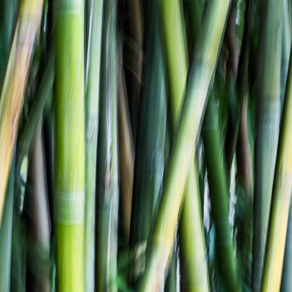 Bambus-II, 2015