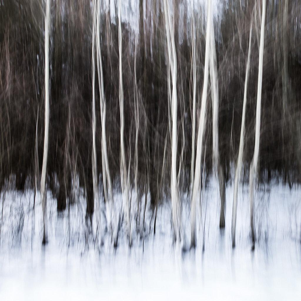Winterwald, 2015